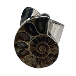 Ammonoid Fossil Bold Ring (RM-47)