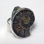 Ammonoid Fossil  Sculptural Ring