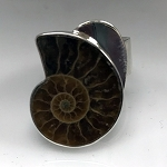 Ammonoid Fossil Modernist Ring