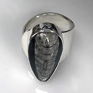Orthoceras Fossil Sculptural Ring